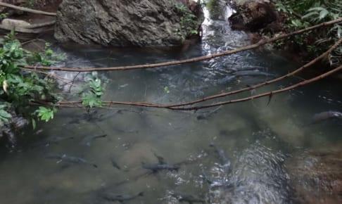 Thampla タムプラー Fish Cave