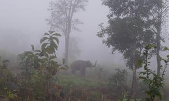 Pai の朝は霧深い
