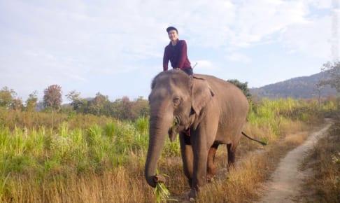 朝の象散歩