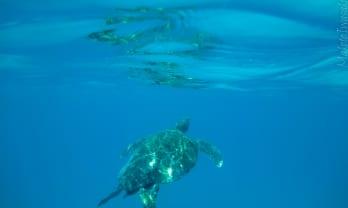 Perhentian の海亀