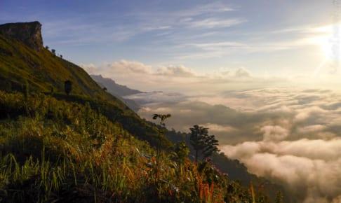 Phu Chi Fa hiking ดอยภูชี้ฟ้า