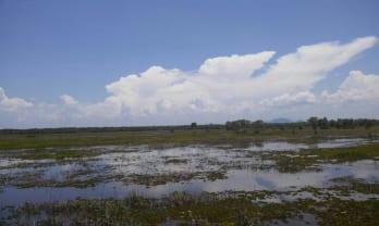 Thale Noi 大湿原には水鳥がいっぱい