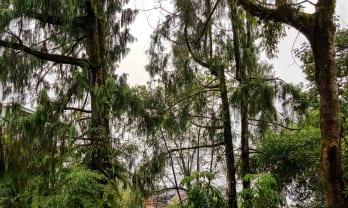 Gangtok は今朝も雨、平均雨量を調べる