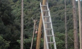 開拓記2:丸太柱を立てる、鶏舎、小屋を作る