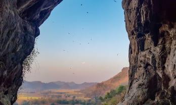 カンカオ洞窟の朝、蝙蝠が洞窟に帰る