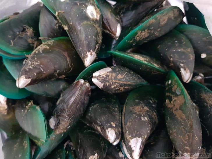 縁が緑色のムール貝、緑イガイ